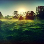 Sun Streaming Through a Foggy Field - by Robert-Paul Jansen - Limited Edition Print at 18x24