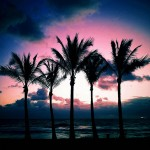 The Five Palms - by Andy Royston - Limited Edition Print at 16x16