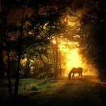 Horse in the Forest at Dawn - by Todd Lee - Limited Edition Print at 16x16